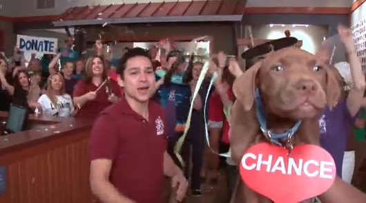 Amazing dance video made by the SPCA (click to see)