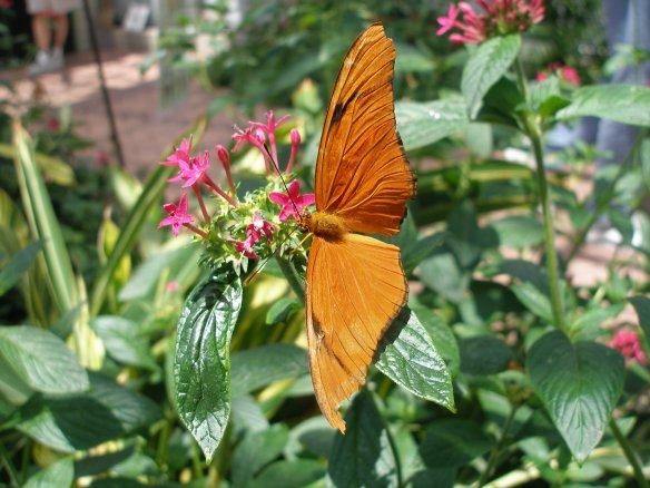 Butterflies & Transcendence.