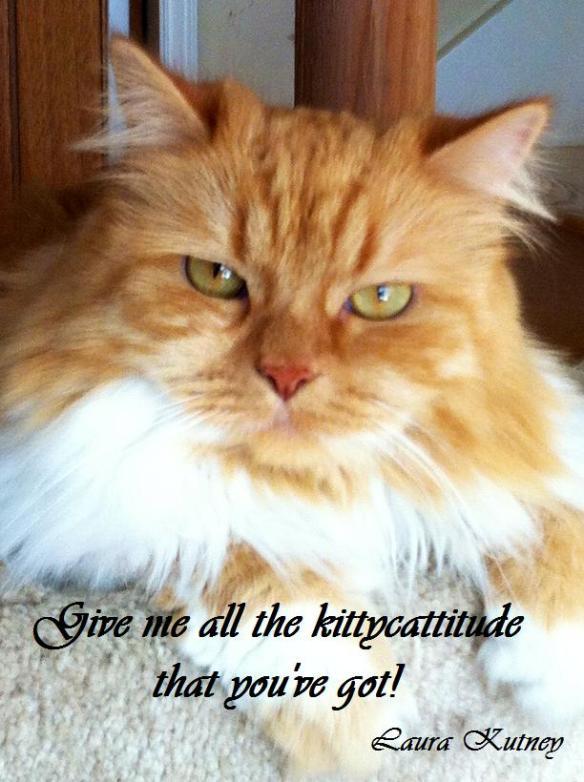 Kittycattitude.